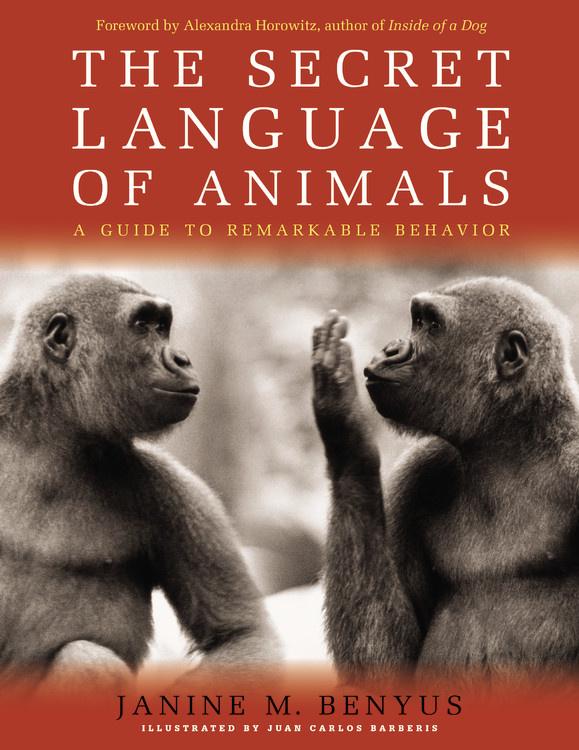 Eating Animals Ebook