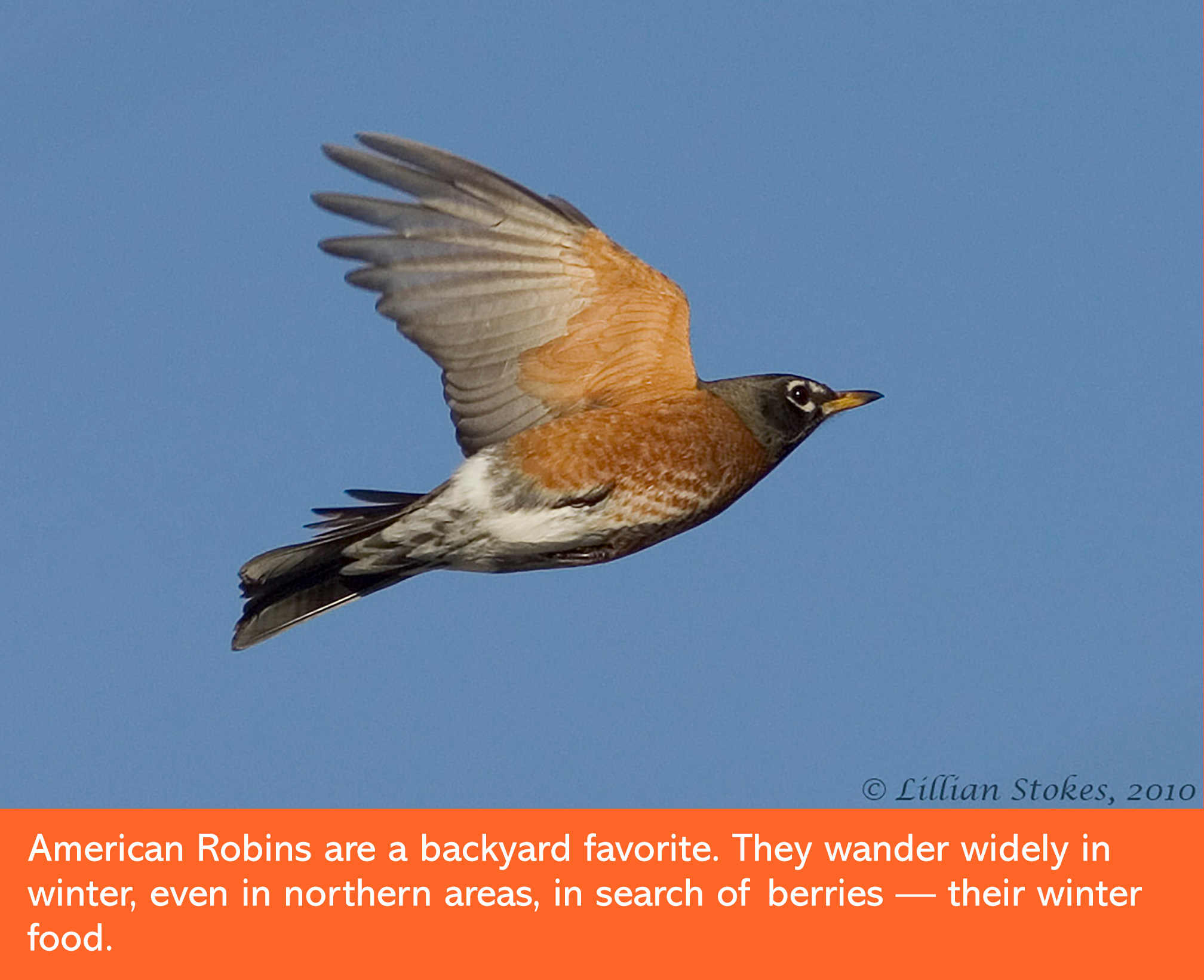 the stokes field guide to the birds of north america u2013 hachette