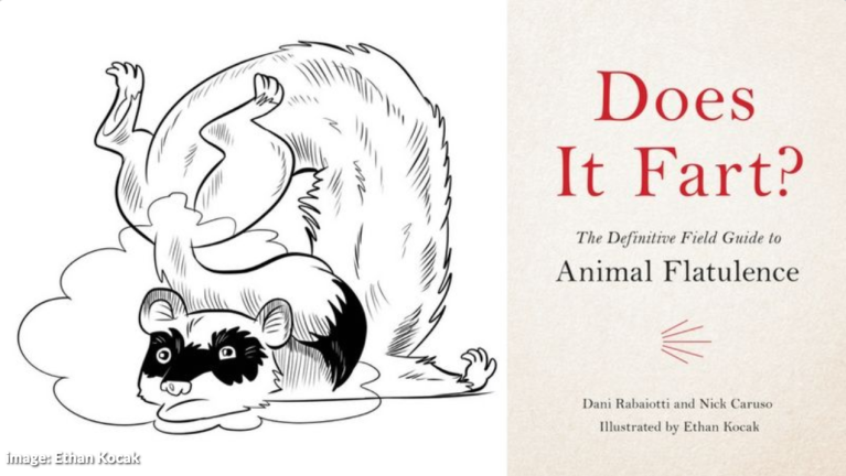 Does It Fart? by Dani Rabaiotti and Nick Caruso | Hachette