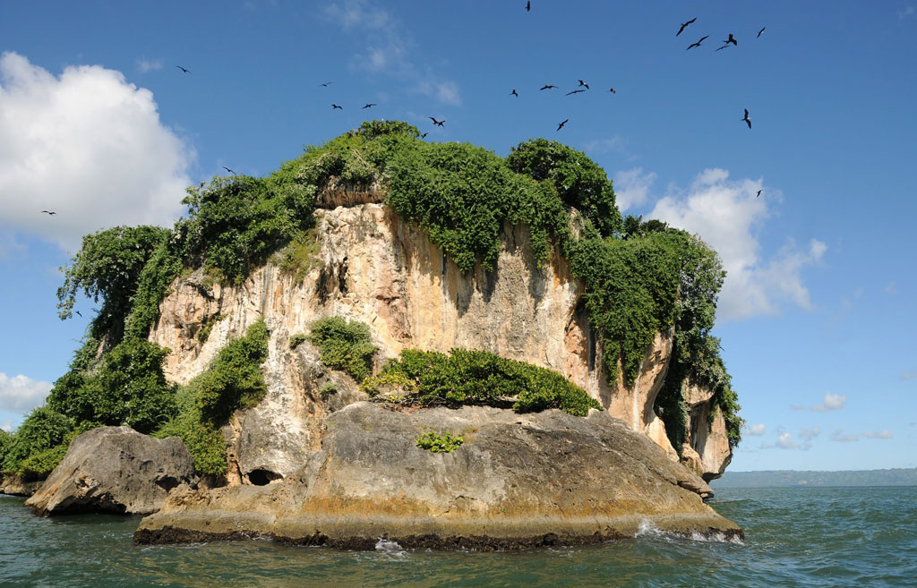 Birds circle a small rocky island topped with vegetation.