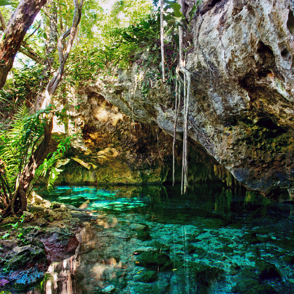 vines hanging over wate at the Gran Cenote in Tulum