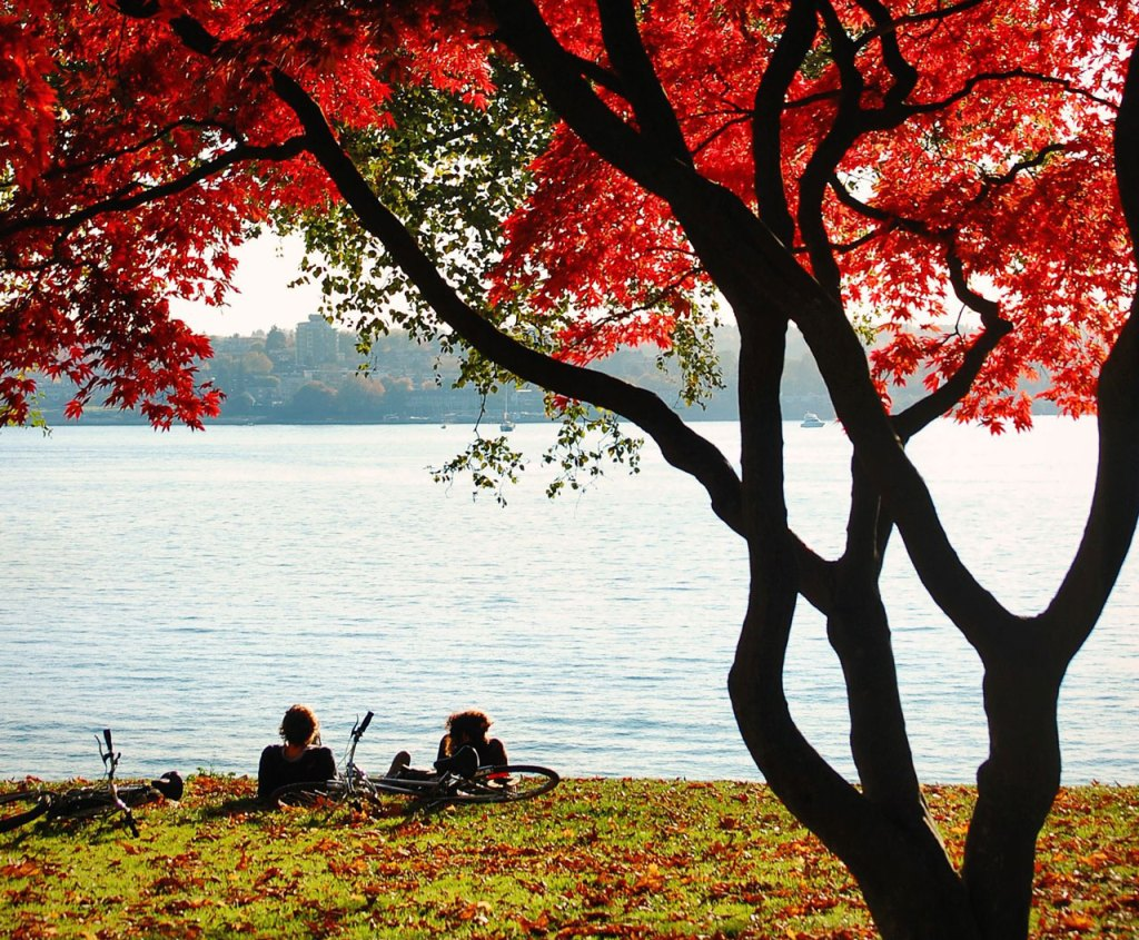 Cyclists sit resting on the shore beneath a tree with fall foliage.