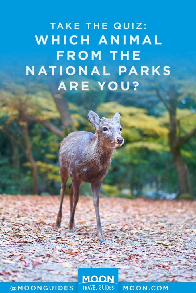 """image that reads """"which animal from the National Parks Are you?"""" with a photo of a baby deer"""